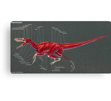 Dakotaraptor Muscle Study Canvas Print