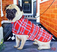 Sad Pug Waiting for Walkies by Hannah Dosanjh