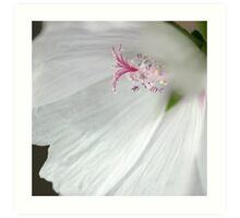 """Camera Shy"" - Square Macro Colour Image of a Hollyhock flower Art Print"