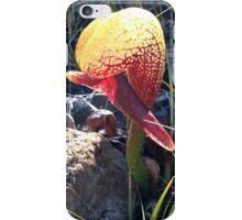 Brilliant Darlingtonia iPhone Case/Skin