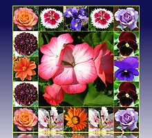 Sunshine and Showers - Summer Flowers Collage by kathrynsgallery