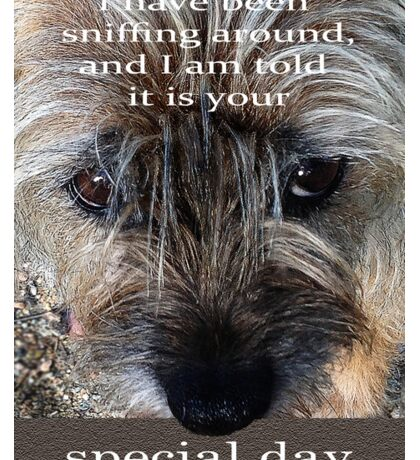 special day,Border terrier, sniffing around, humor  Sticker