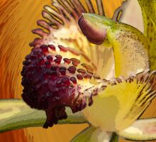 Swamp Orchid with Orange Swirl, native orchid. Sticker