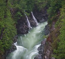 Gordon River by Carrie Cole