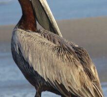 Oceanside Portrait of a Pelican Sticker