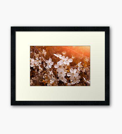 Blossoming Garden Framed Print