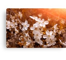 Blossoming Garden Canvas Print