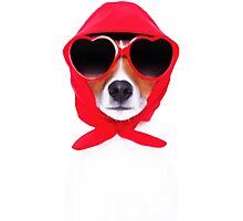 Dog Wearing Heart Red Glasses & Red Veil Photographic Print