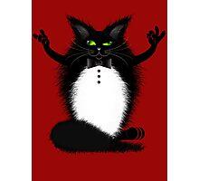 ZIGGY THE CAT Photographic Print
