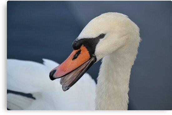 Swan Lake by BirgitHM