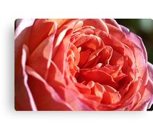 Rich and Elegant Rose Canvas Print