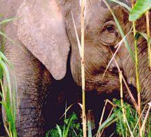 Malaysian Pygmy Elephant calf Sticker