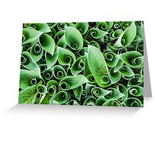 Interesting plant pattern Greeting Card