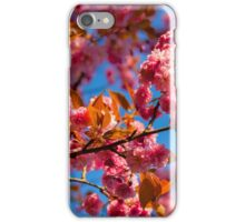 Chinese cherry in bloom iPhone Case/Skin