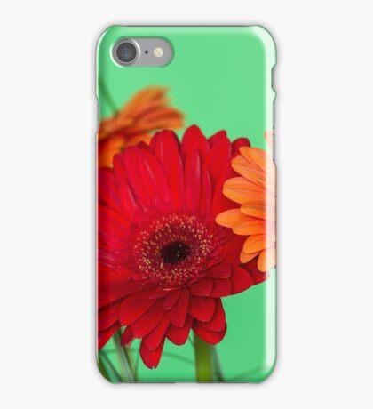 Gerberas in vase on a green background iPhone Case/Skin
