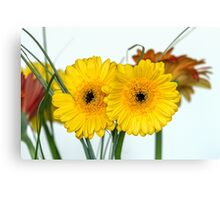 Two gerberas Canvas Print