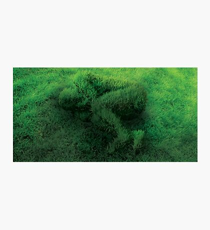 Sleeping On Grass Photographic Print