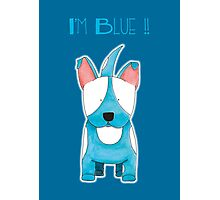 I'm Blue !! - Bull Terrier Dog Photographic Print