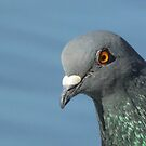 Pigeon by taiche