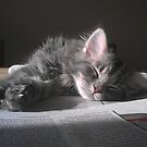 Little Sleepy Kitten by ienemien