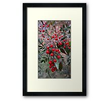 Frozen Holly Framed Print