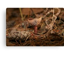 Pink Wax cap Fungi  Canvas Print