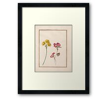 Circle of Madeleine Francoise Basseporte, , Double Dwarf Jonquil (Narcissus jonquilla minor) (left). Phlox (right) Framed Print