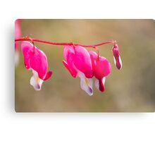 dicentra fuchsia in the garden Metal Print