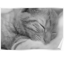 Sleeping Cat Black & White Poster