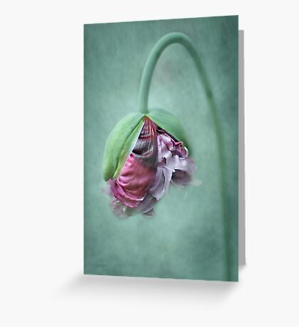 Frilly Petticoat Greeting Card