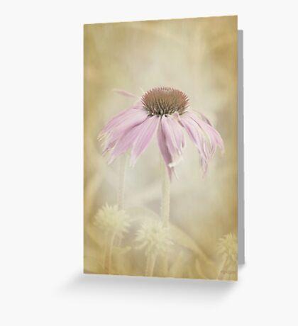 Dusky Echinacea Greeting Card