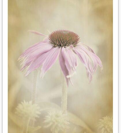 Dusky Echinacea Sticker