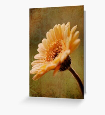 Golden Gerbera Greeting Card