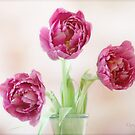 Pink Ladies by OpalFire
