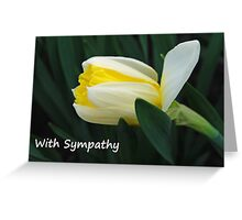 Daffodil Sympathy Card Greeting Card