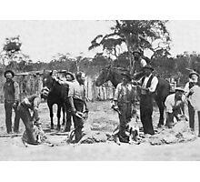 Shearing c1895 Photographic Print