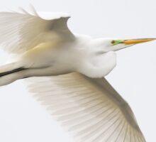 Great Egret - Florida Sticker