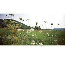Queen Anne's Lace - Lomo Belair Photograph Photographic Print
