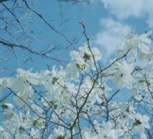 Springtime Magnolias Sticker