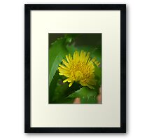 NS Yellow And Delicate© Framed Print