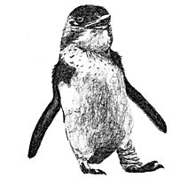 Ink Penguin Photographic Print