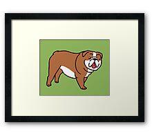 Cute English Bulldog Framed Print