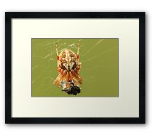 Spider and Prey Framed Print