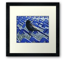 firm purchase (crow with shopping trolleys) Framed Print