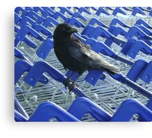 firm purchase (crow with shopping trolleys) Canvas Print