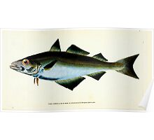 The Natural History of British Fishes Edward Donovan 1802 009 Poster