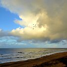Five gulls came flying along the coast by jchanders