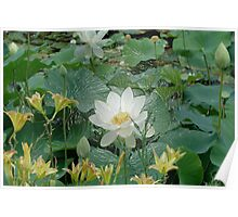 White Lotus in Lake - Tee for Flower Lovers, Phone cases Poster