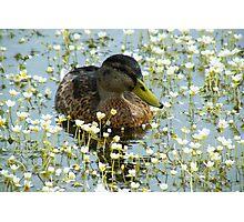 Flower Duck Photographic Print