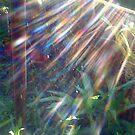 Rainbows in a Spider Web by MardiGCalero